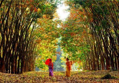 最美铁路森林风景